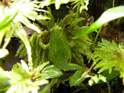 Greendfrog