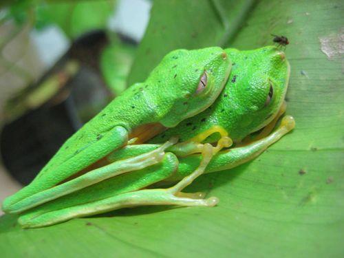 Flyfrogsex